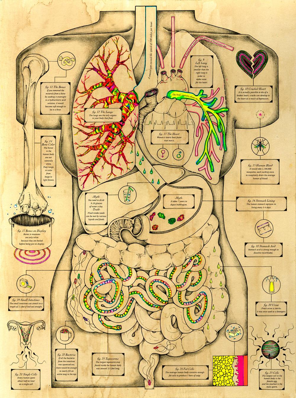 cuerpo_humano